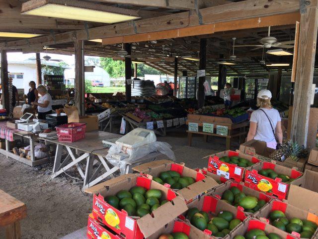 Piață locală, Florida, USA - Cristela GEORGESCU